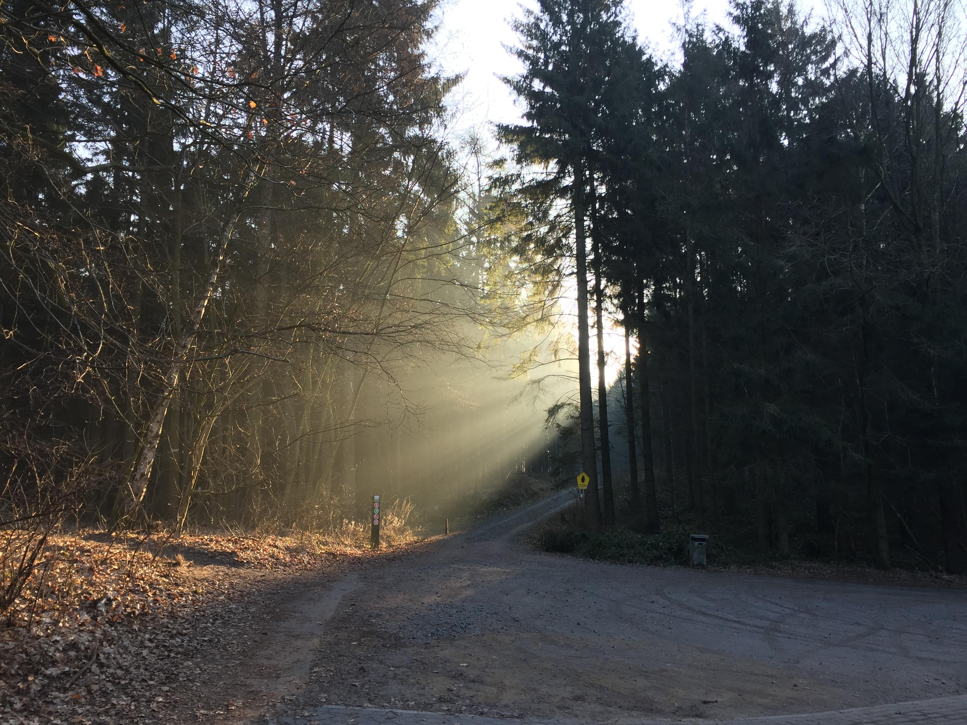 Der woodstocking® Weg zur Meditation